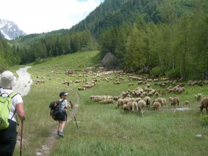 Following the flock up to Lognan