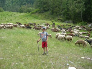A young shepherd at work!